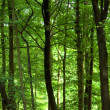 Dense green forest — Stock Photo #29563871