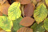 Tło z opadłych liści — Zdjęcie stockowe