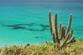 Close-up of cacti with atlantic ocean in the background — Stock Photo