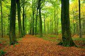 Camino a través de bosque frondoso — Foto de Stock