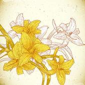 Floral bakgrund med gula liljor — Stockvektor