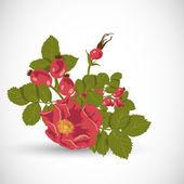 Tle kwiatów z dzikiej róży — Wektor stockowy