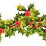 Christmas Holly background — Stock Photo