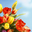 Colored tulips in front of blue sky — Stock Photo