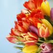 Stock Photo: Colored tulips in front of blue sky