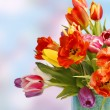 Beautiful colored tulips — Stock Photo