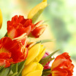 Stock Photo: Bunch of colored tulips