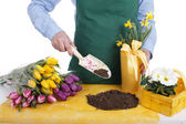 Woman repotting spring flowers — Stock Photo