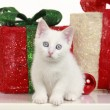 Cute white cat with christmas decoration — Stock Photo