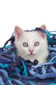 Katt med ull bollen — Stockfoto