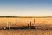 Pasture — Foto Stock