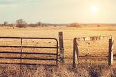 Pasture — Stock Photo