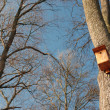 Bird feeder — Stock Photo #38032003