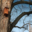 Bird feeder — Stock Photo #38032065