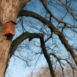 Bird feeder — Stock Photo #38032091