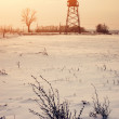 Stock Photo: Winter field