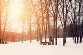 Vinterparken — Stockfoto