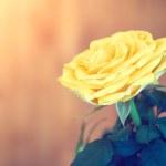 Yellow rose — Stock Photo #46106799