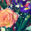 Colorful roses — Stock Photo #46106811