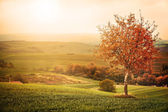 Tree on the meadow — Stock Photo