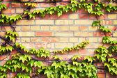 Rusty wall — Stock Photo
