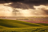 Beautiful field — Foto Stock
