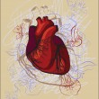 Vector drawing of the heart, anatomical — Vektorgrafik