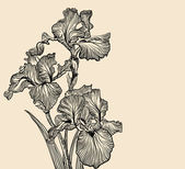 Vector decorative designs of iris flowers — Stockvector