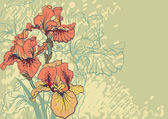 Vector decorative designs of iris flowers — Stock Vector