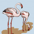 Two painted flamingo birds - vector illustration — Stock Vector