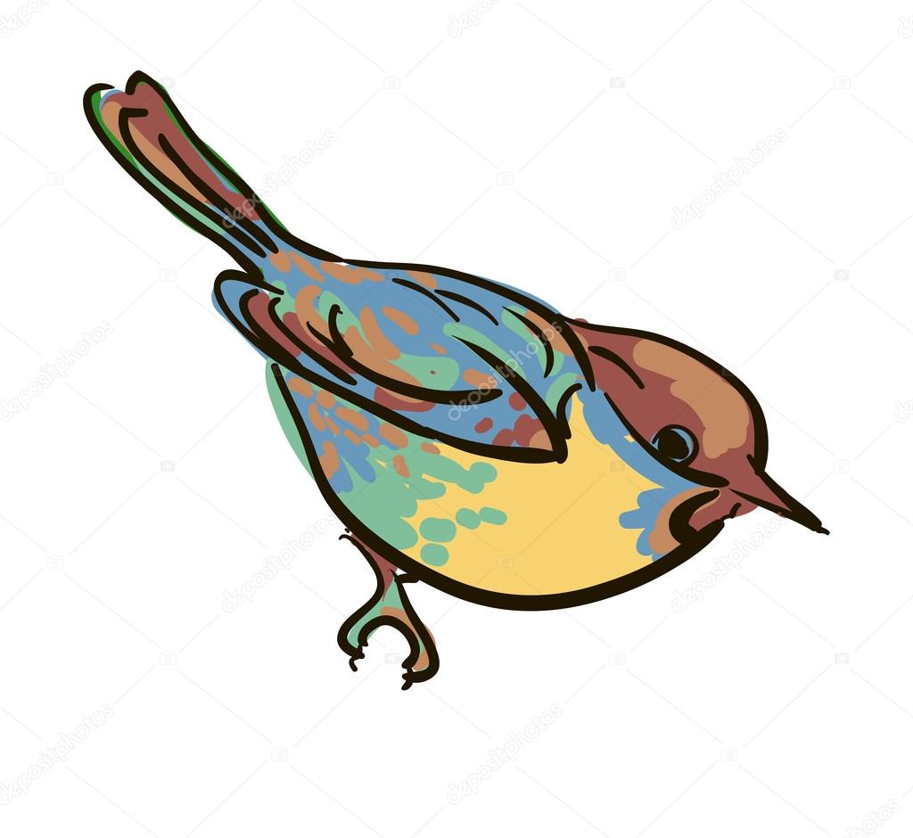 Robin bird flying drawing