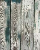 Ra del viejo árbol cubierto con pintura despojado — Foto de Stock