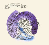 Hand drawn illustration of cabbage — 图库矢量图片