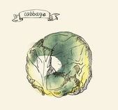 Hand drawn illustration of cabbage — Stockvektor