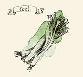 Hand drawn illustration of leek — Stock Vector