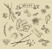 Hand drawn spices — Stock Vector