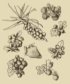 Illustration set of berries — Stock Vector