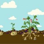 Stylized vegetables set — Stock Vector