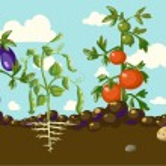 Stylized vegetables set — Stock Vector #41186379
