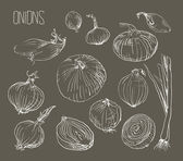Illustration of  Onions set — Stockvektor