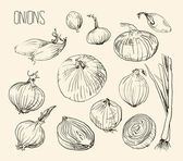 Organic Onions set — Stock Vector