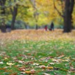 Stock Photo: Autumn seasonal background