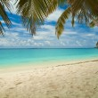Tropical beach with palm trees — Stock Photo #26007757