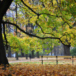 Single bench in park, under beautiful tree, autumn — Stock Photo