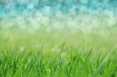 Spring. holiday background — Stock Photo