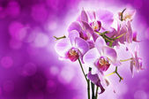 Violet orchid on purple bokeh background — Stock Photo