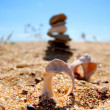 Shells at beach — Stock Photo #30155921