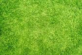 草の背景 — ストック写真