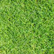Green grass texture — Foto de Stock