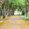Pathway on park — Stock Photo